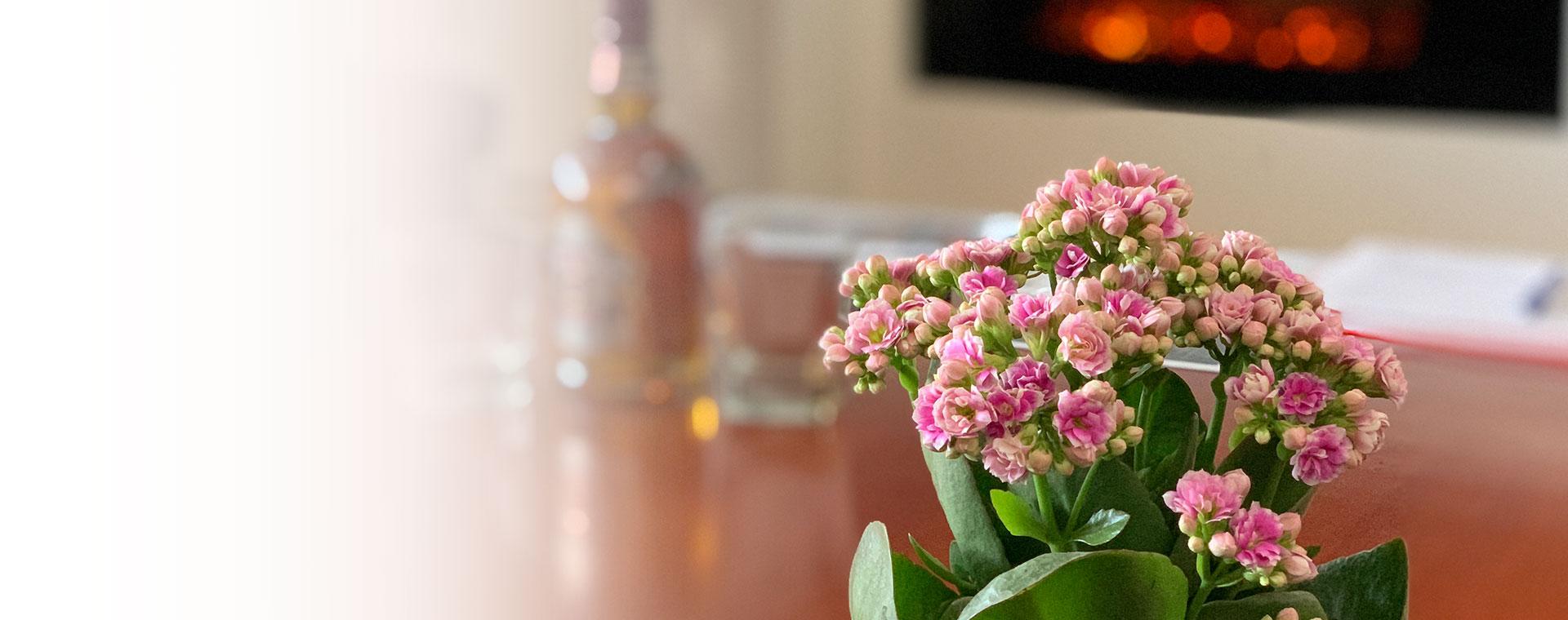Madame Cvećara | Sve vrste sobnog cveća