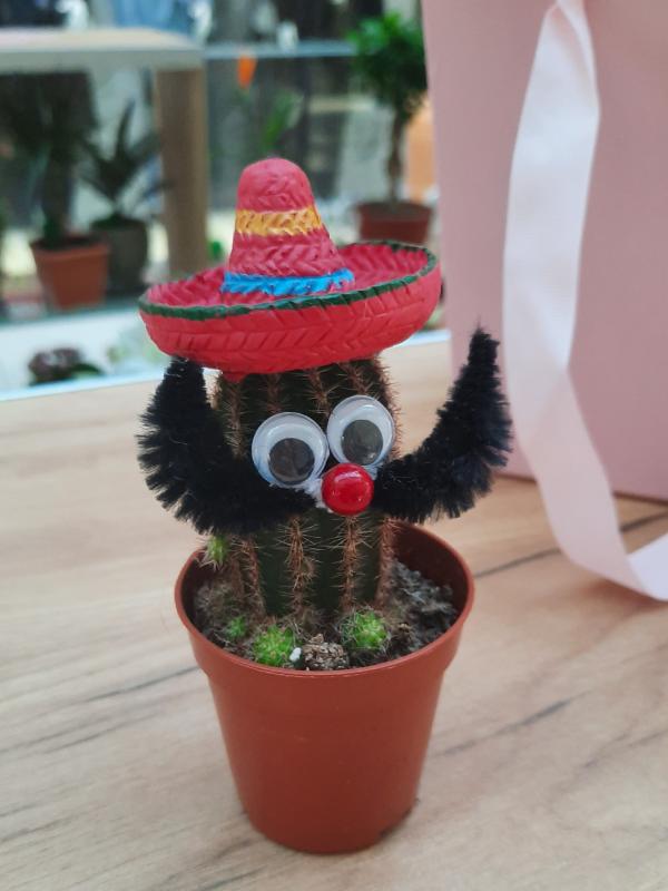Kaktus Sombrero